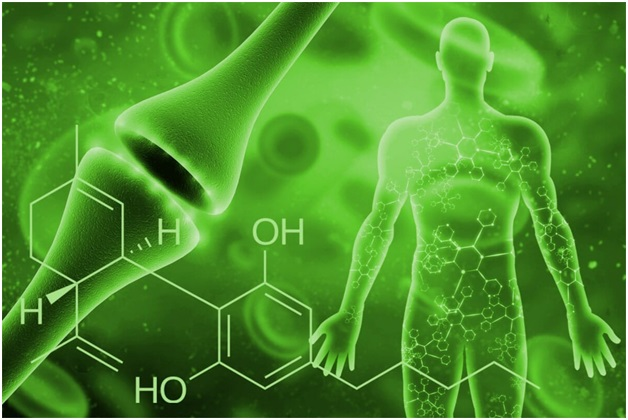 When should you consume Anandamide and Phosphatidylserine?